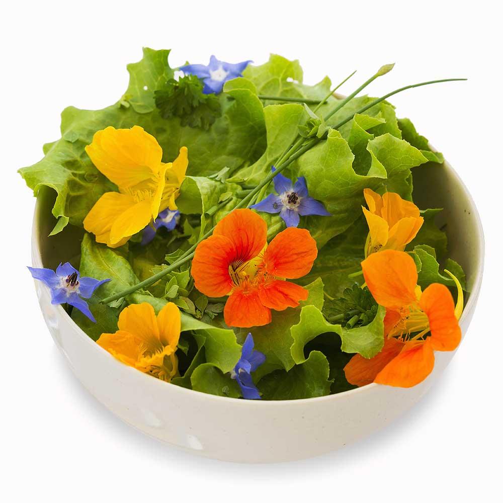 Eetbare bloemen, lekkerste toevoegingen aan jouw salade!