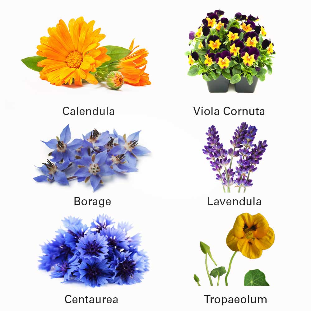Eetbare Bloemen, voortaan doe jij deze bloemen in jouw salade!