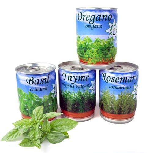 Herbs-in-a-tin - Koriander