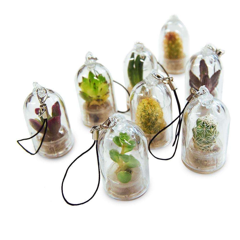 De Pocket Tree is een schattig levend plantje die je altijd bij je kunt houden!