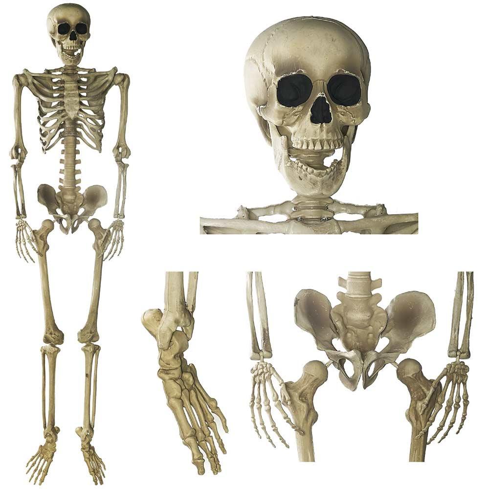 Halloween levensechte skelet 150cm | Megagadgets